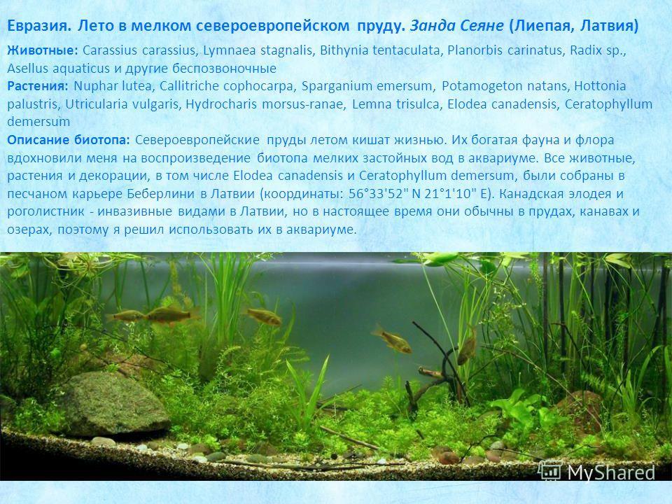 Животные: Carassius carassius, Lymnaea stagnalis, Bithynia tentaculata, Planorbis carinatus, Radix sp., Asellus aquaticus и другие беспозвоночные Растения: Nuphar lutea, Callitriche cophocarpa, Sparganium emersum, Potamogeton natans, Hottonia palustr