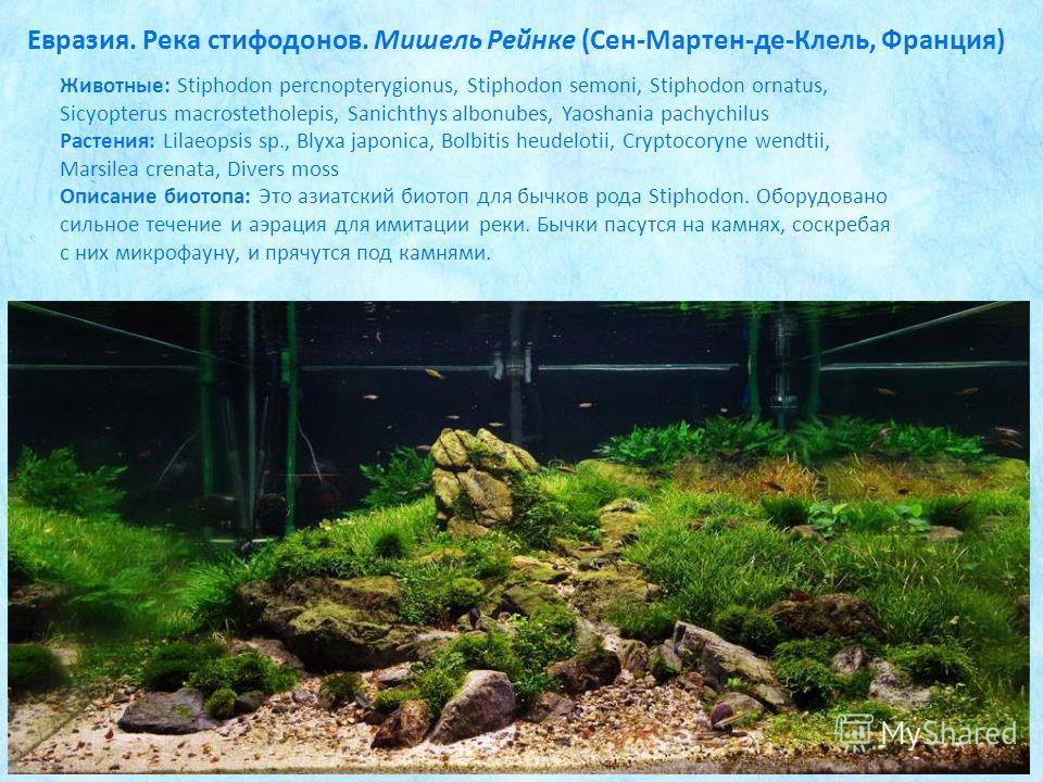 Животные: Stiphodon percnopterygionus, Stiphodon semoni, Stiphodon ornatus, Sicyopterus macrostetholepis, Sanichthys albonubes, Yaoshania pachychilus Растения: Lilaeopsis sp., Blyxa japonica, Bolbitis heudelotii, Cryptocoryne wendtii, Marsilea crenat