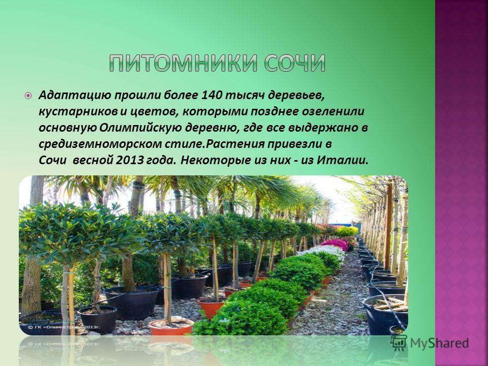 Адаптацию прошли более 140 тысяч деревьев, кустарников и цветов, которыми позднее озеленили основную Олимпийскую деревню, где все выдержано в средиземноморском стиле.Растения привезли в Сочи весной 2013 года. Некоторые из них - из Италии.