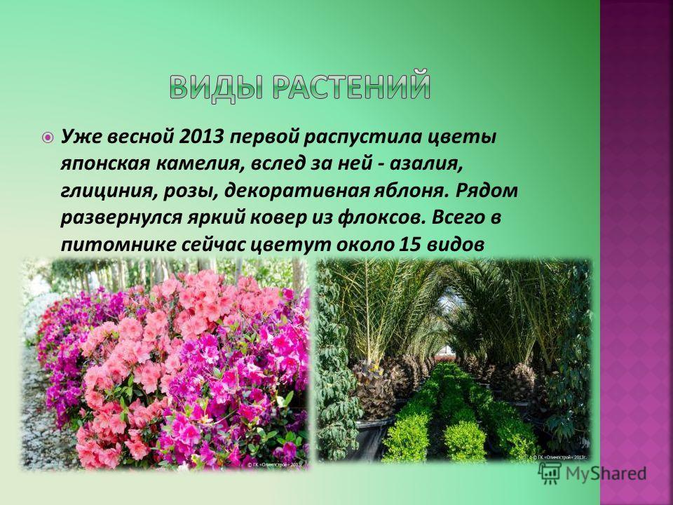 Уже весной 2013 первой распустила цветы японская камелия, вслед за ней - азалия, глициния, розы, декоративная яблоня. Рядом развернулся яркий ковер из флоксов. Всего в питомнике сейчас цветут около 15 видов растений.