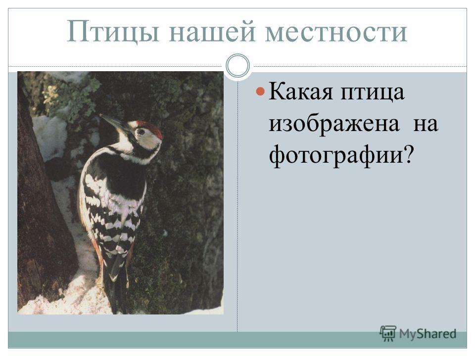 Птицы нашей местности Какая птица изображена на фотографии?