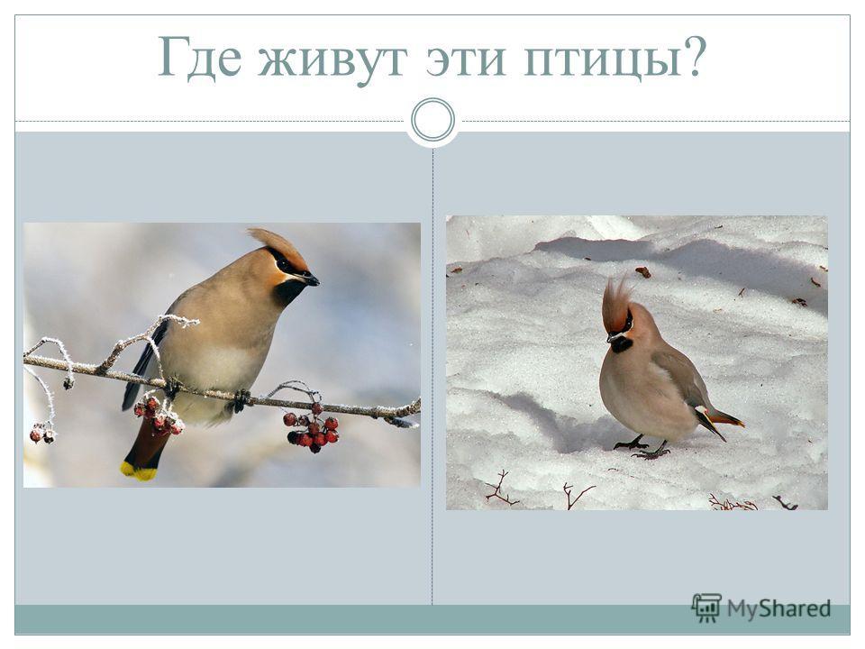 Где живут эти птицы?