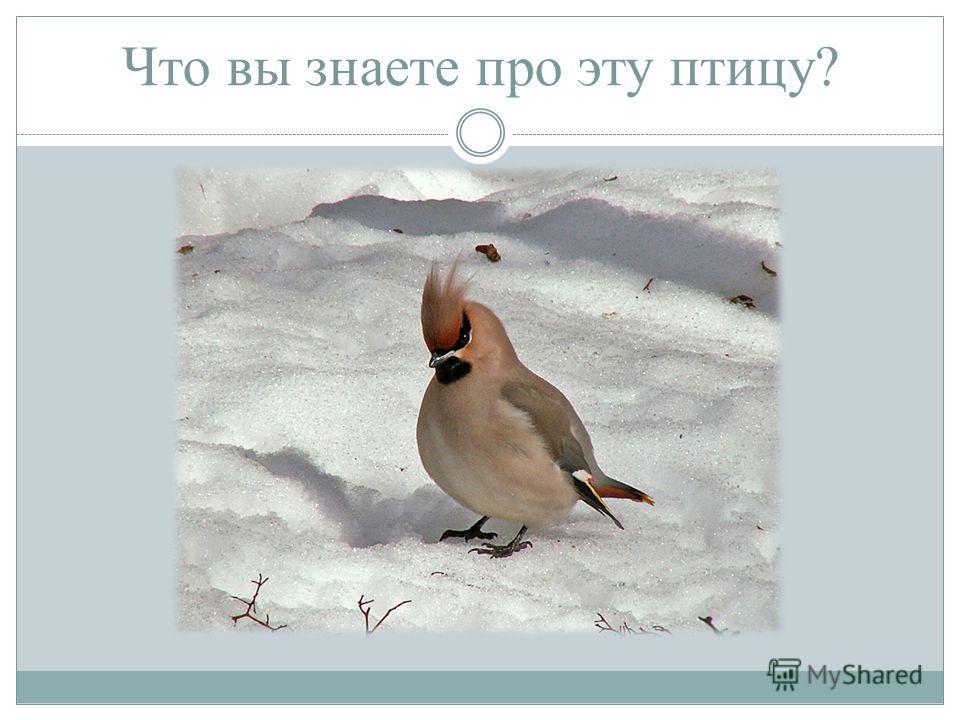 Что вы знаете про эту птицу?