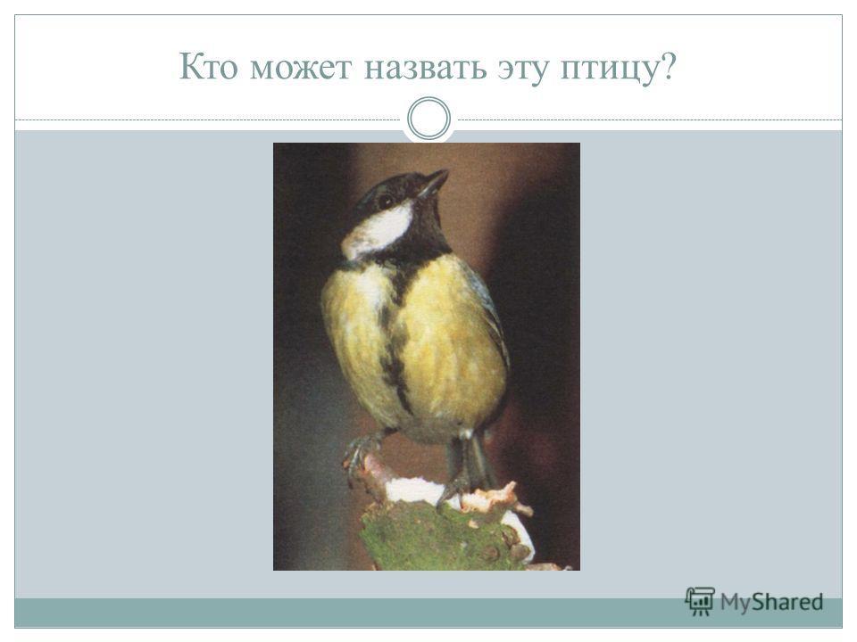 Кто может назвать эту птицу?
