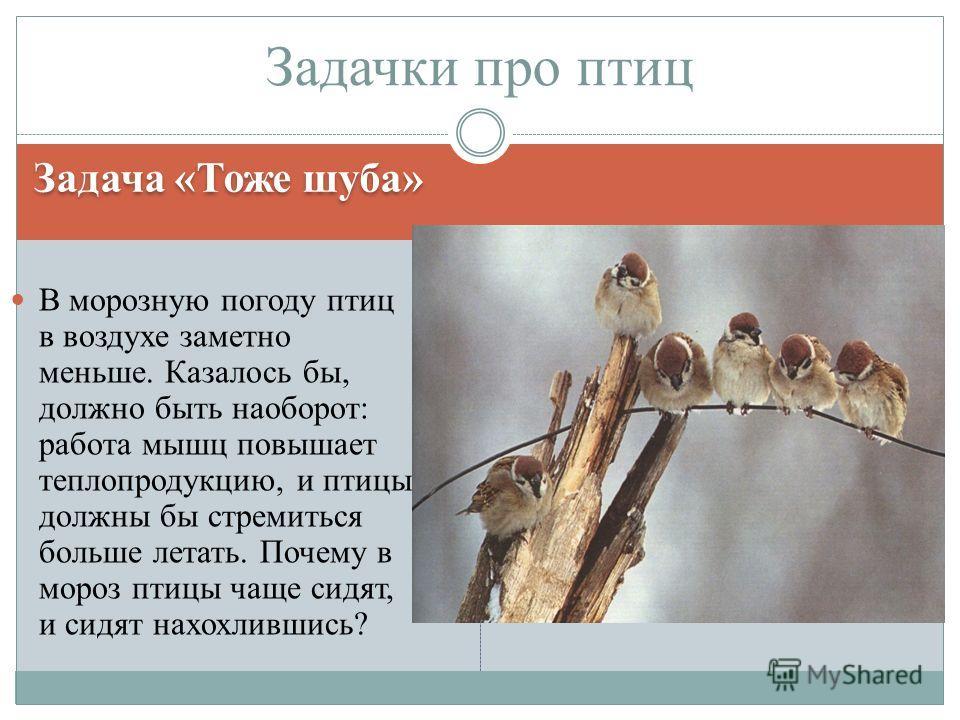 Задача «Тоже шуба» В морозную погоду птиц в воздухе заметно меньше. Казалось бы, должно быть наоборот: работа мышц повышает теплопродукцию, и птицы должны бы стремиться больше летать. Почему в мороз птицы чаще сидят, и сидят нахохлившись? Задачки про