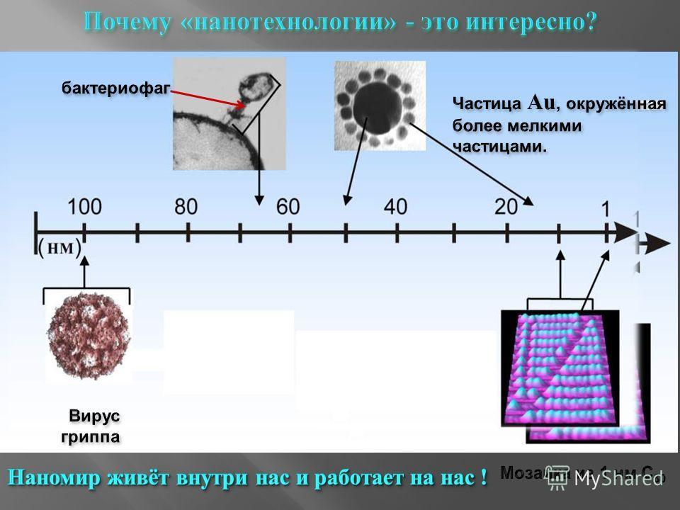 бактериофаг Вирус гриппа Частица Au, окружённая более мелкими