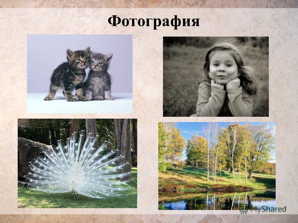 Фотографея