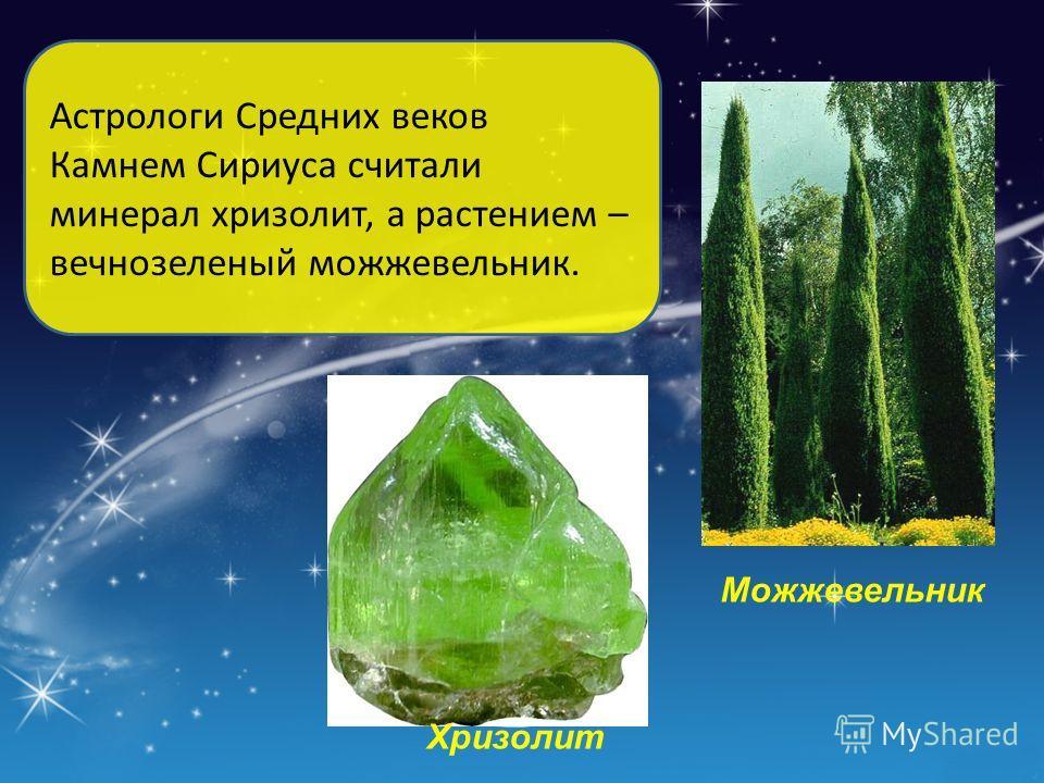 Астрологи Средних веков Камнем Сириуса считали минерал хризолит, а растением – вечнозеленый можжевельник. Можжевельник Хризолит