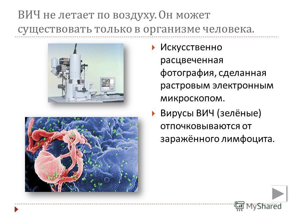 ВИЧ не летает по воздуху. Он может существовать только в организме человека. Искусственно расцвеченная фотография, сделанная растровым электронным микроскопом. Вирусы ВИЧ ( зелёные ) отпочковываются от заражённого лимфоцита.