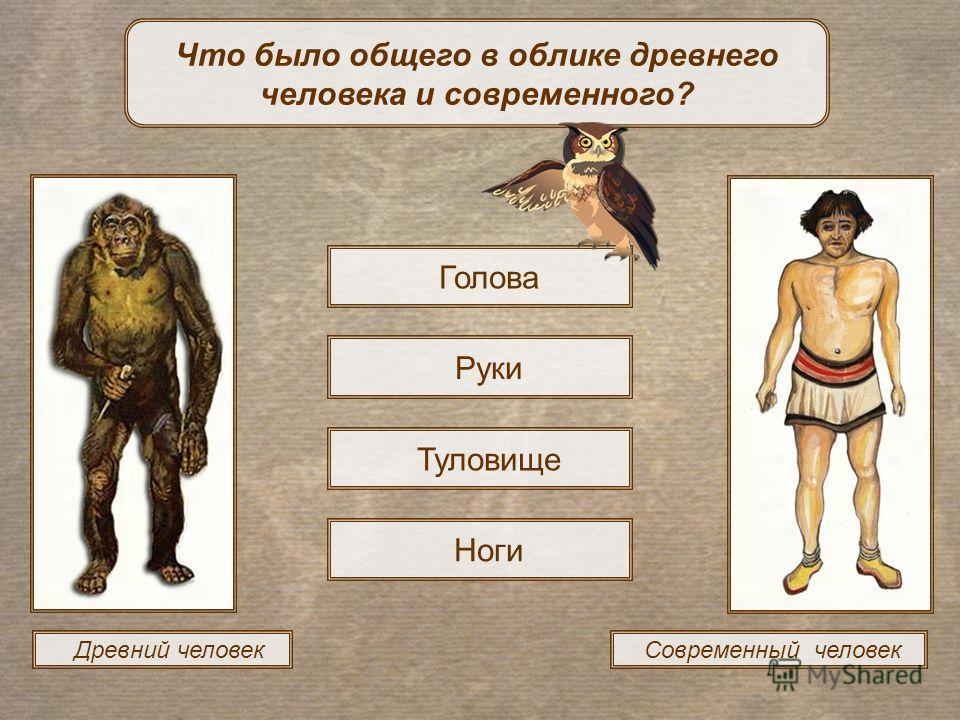 Древний человек Современный человек Что было общего в облике древнего человека и современного? Голова Руки Туловище Ноги