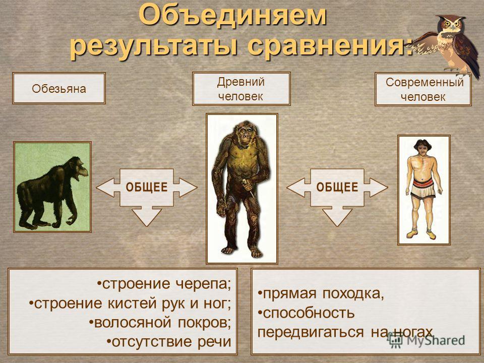 Современный человек Древний человек прямая походка, способность передвигаться на ногах строение черепа; строение кистей рук и ног; волосяной покров; отсутствие речи Объединяем результаты сравнения: Обезьяна