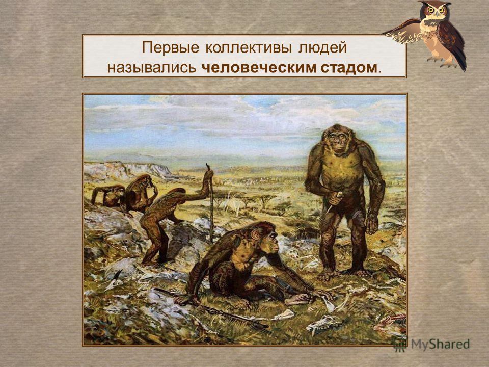 Первые коллективы людей назывались человеческим стадом.