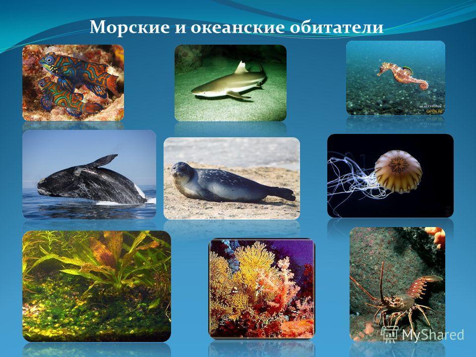 Морские и океанские обитатели