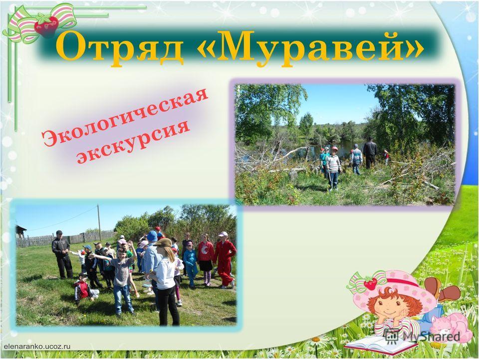 Отряд «Муравей» Экологическая экскурсия