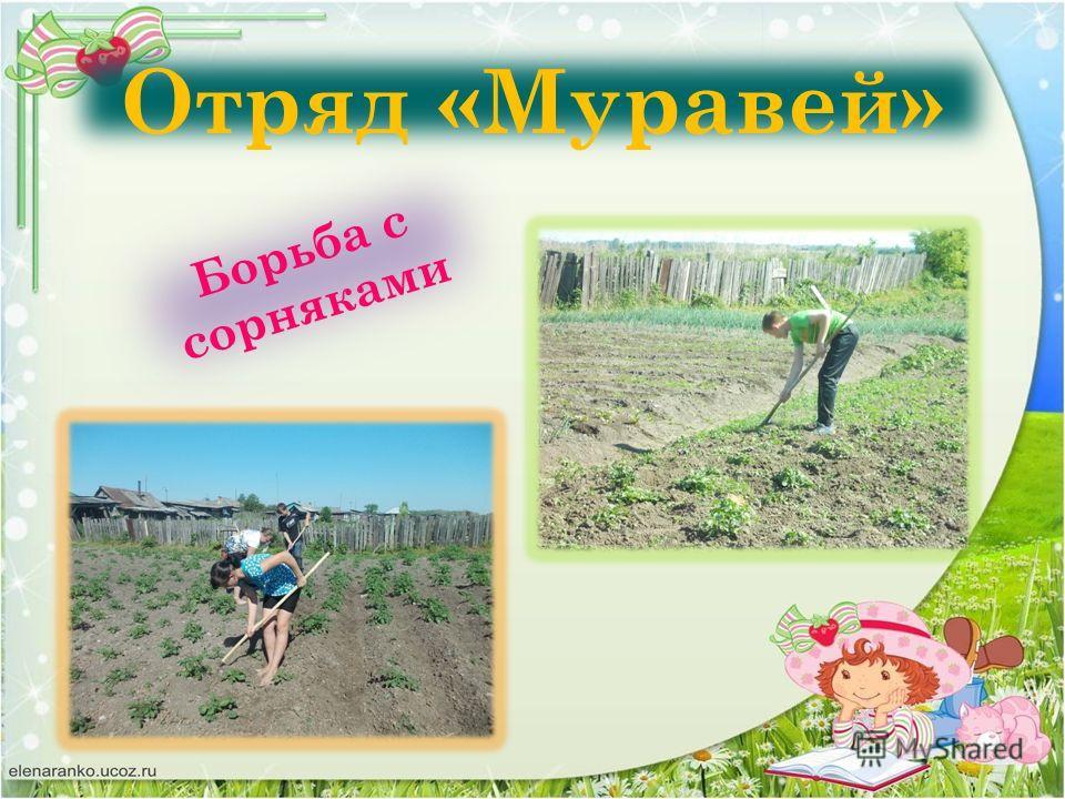 Отряд «Муравей» Борьба с сорняками