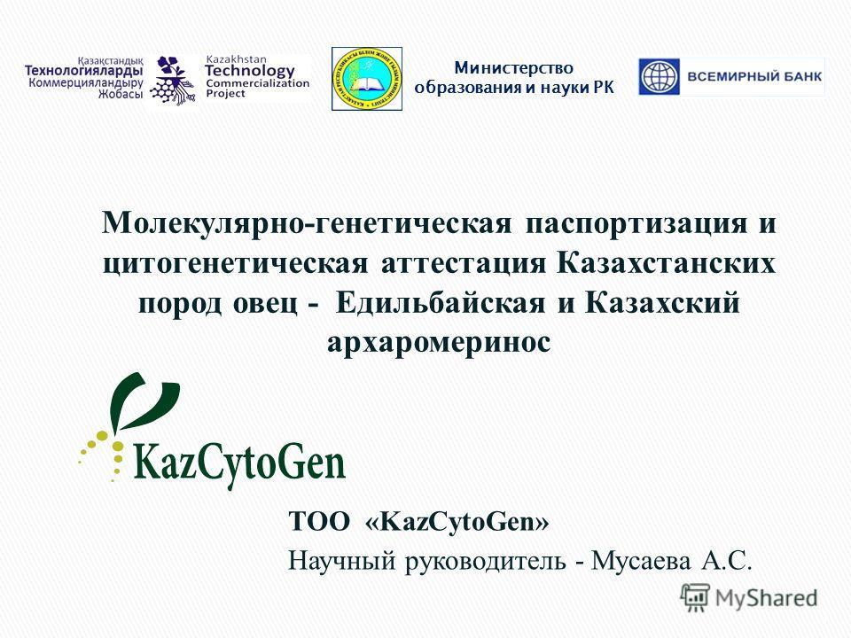 Министерство образования и науки РК ТОО «KazCytoGen» Научный руководитель - Мусаева А.С. 1 Молекулярно-генетическая паспортизация и цитогенетическая аттестация Казахстанских пород овец - Едильбайская и Казахский архаромеринос