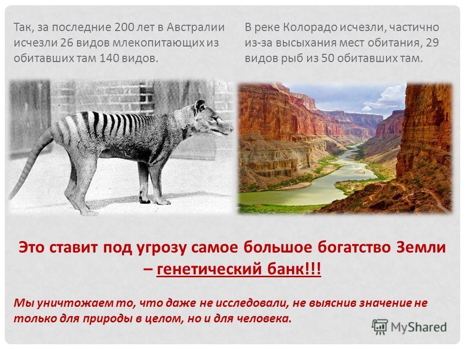 Так, за последние 200 лет в Австралии исчезли 26 видов млекопитающих из обитавших там 140 видов. Это ставит под угрозу самое большое богатство Земли – генетический банк!!! Мы уничтожаем то, что даже не исследовали, не выяснив значение не только для п