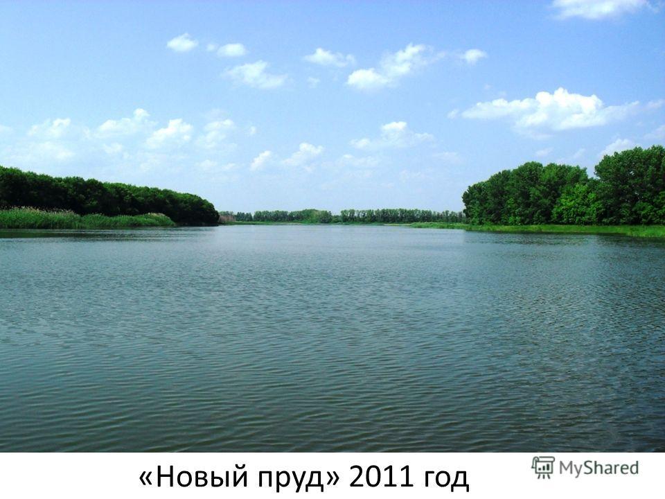 «Новый пруд» 2011 год