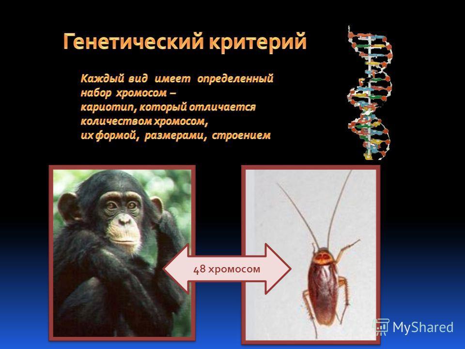 48 хромосом