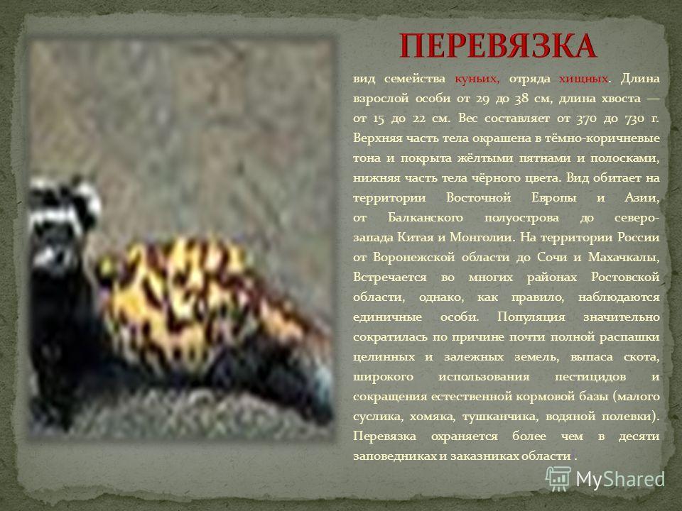 семейство кошачьих отряда хищных. Крупная кошка. Длина тела с хвостом 85135 см, вес до 30 кг ]. Общее распространение лесная и горная зоны от Западной Европы до Дальнего Востока России и на юг до Средней Азии и Тибетского нагорья. В Ростовской област