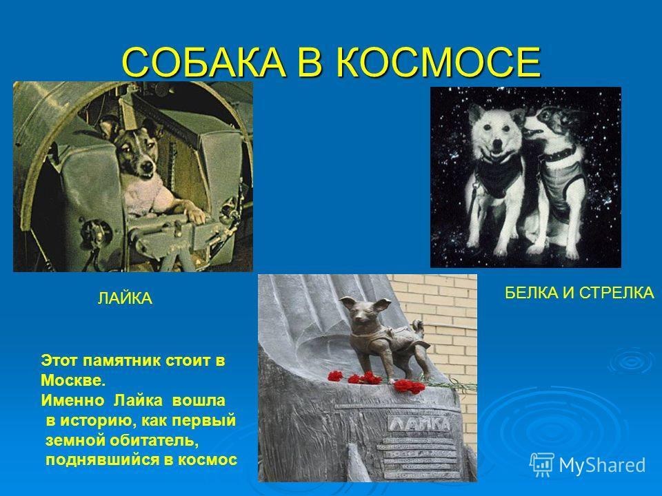 СОБАКА В КОСМОСЕ ЛАЙКА БЕЛКА И СТРЕЛКА Этот памятник стоит в Москве. Именно Лайка вошла в историю, как первый земной обитатель, поднявшийся в космос