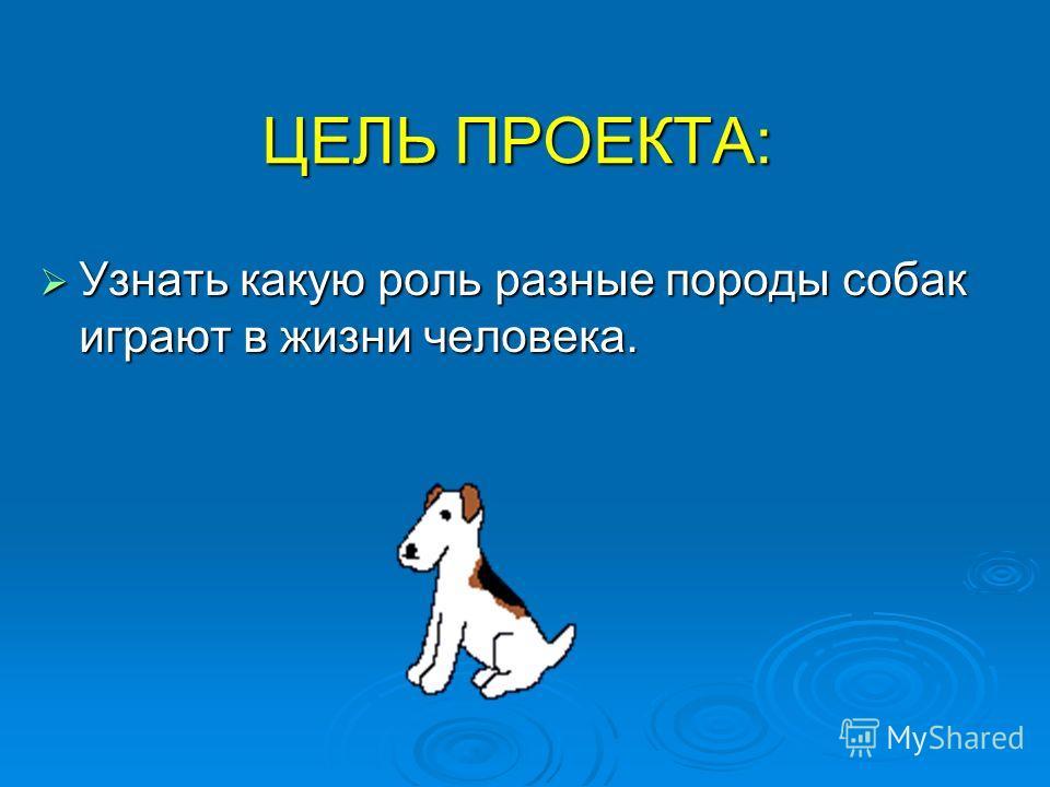 ЦЕЛЬ ПРОЕКТА: Узнать какую роль разные породы собак играют в жизни человека. Узнать какую роль разные породы собак играют в жизни человека.