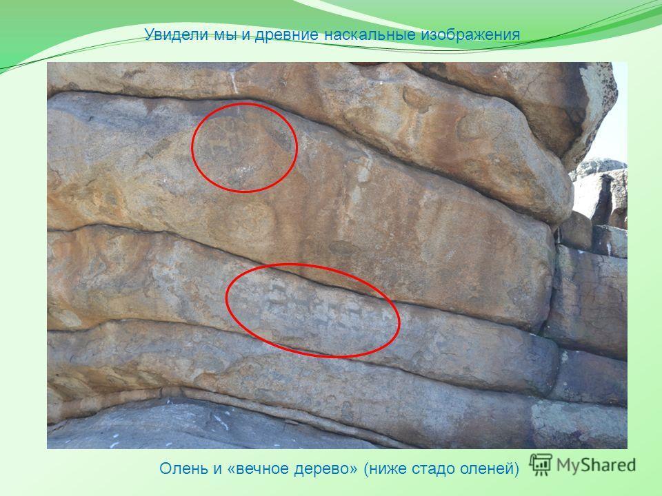 Грот Ак-Баура находится в предгорьях Алтая недалеко от Усть-Каменогорска, но его рисунки очень похожи на пиктограммы подобных объектов, расположенных в предгорьях Гималаев. Какая связь может быть между ними? Вполне возможно, что в древние времена нар