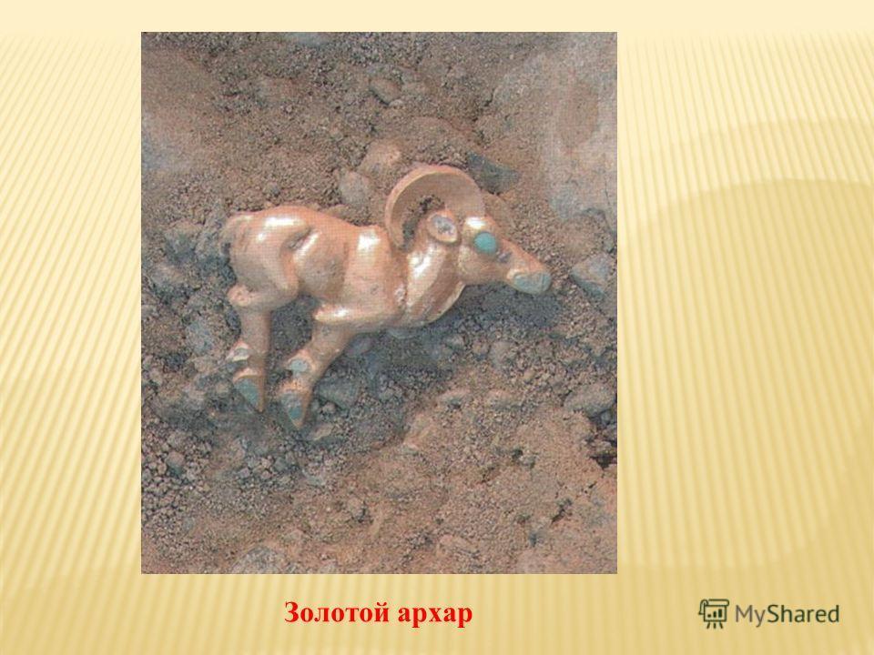 Золотой архар