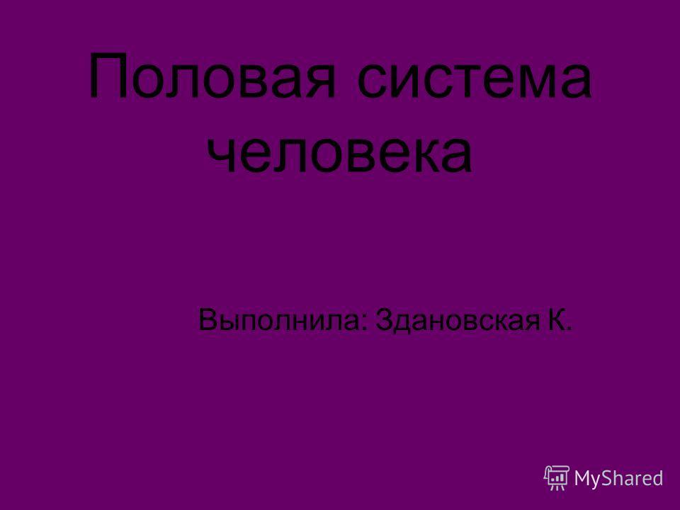 Половая система человека Выполнила: Здановская К.