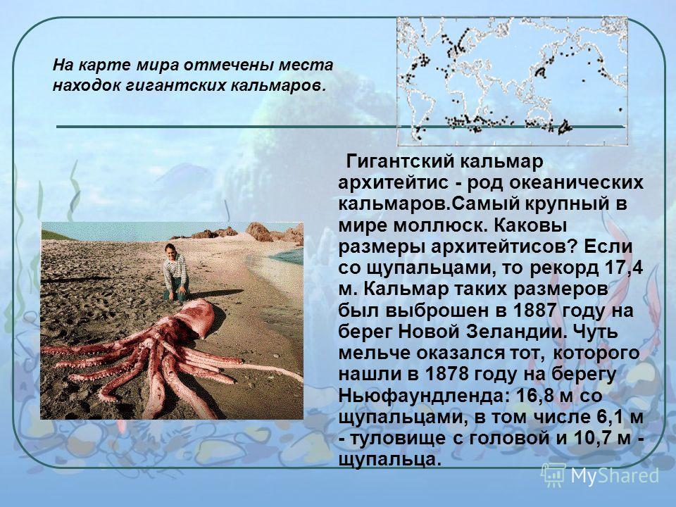 Гигантский кальмар архитейтис - род океанических кальмаров.Самый крупный в мире моллюск. Каковы размеры архитейтисов? Если со щупальцами, то рекорд 17,4 м. Кальмар таких размеров был выброшен в 1887 году на берег Новой Зеландии. Чуть мельче оказался