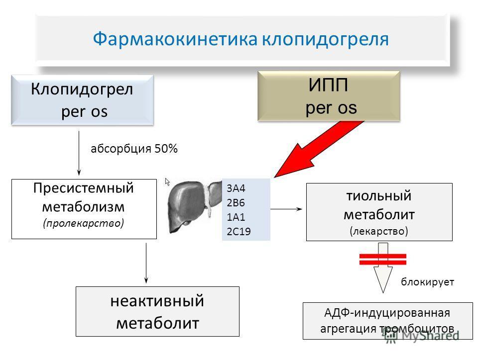 Клопидогрел per os Клопидогрел per os неактивный метаболит тиольный метаболит (лекарство) Пресистемный метаболизм (пролекарство) АДФ-индуцированная агрегация тромбоцитов абсорбция 50% 3А4 2В6 1А1 2С19 блокирует ИПП per os ИПП per os