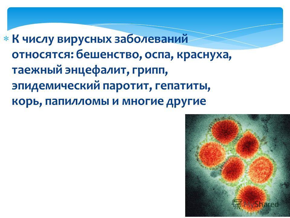 К числу вирусных заболеваний относятся: бешенство, оспа, краснуха, таежный энцефалит, грипп, эпидемический паротит, гепатиты, корь, папилломы и многие другие
