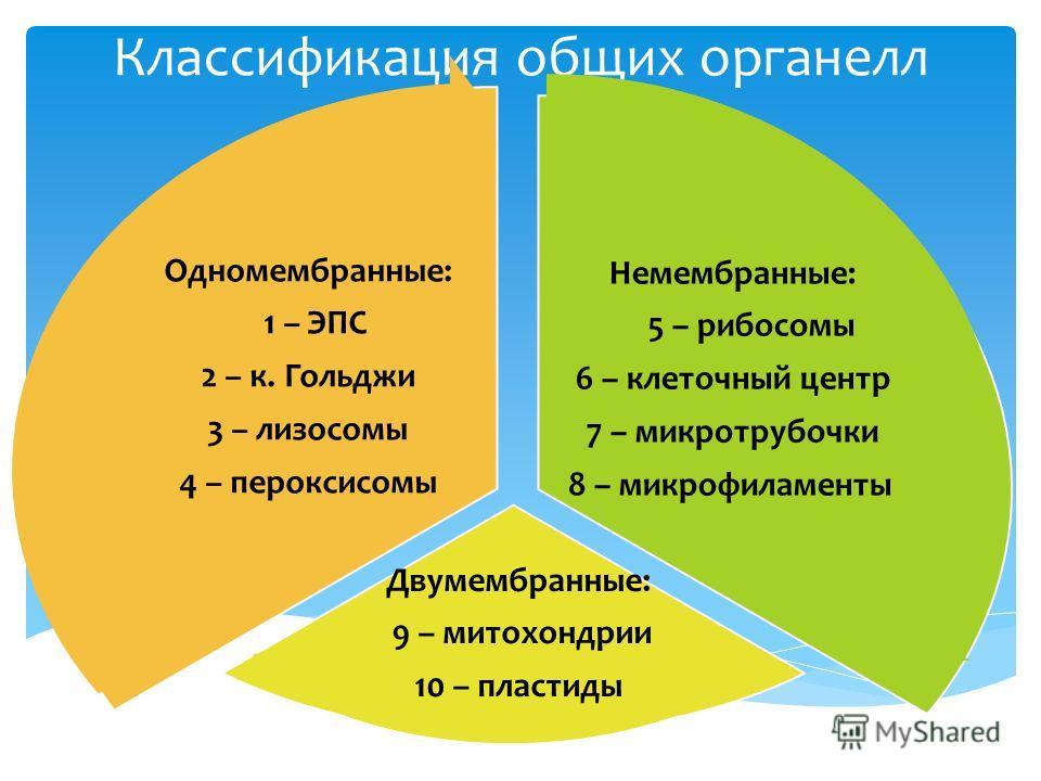 Классификация общих органелл Немембранные: 5 – рибосомы 6 – клеточный центр 7 – микротрубочки 8 – микрофиламенты Двумембранные: 9 – митохондрии 10 – пластиды Одномембранные: 1 – ЭПС 2 – к. Гольджи 3 – лизосомы 4 – пероксисомы