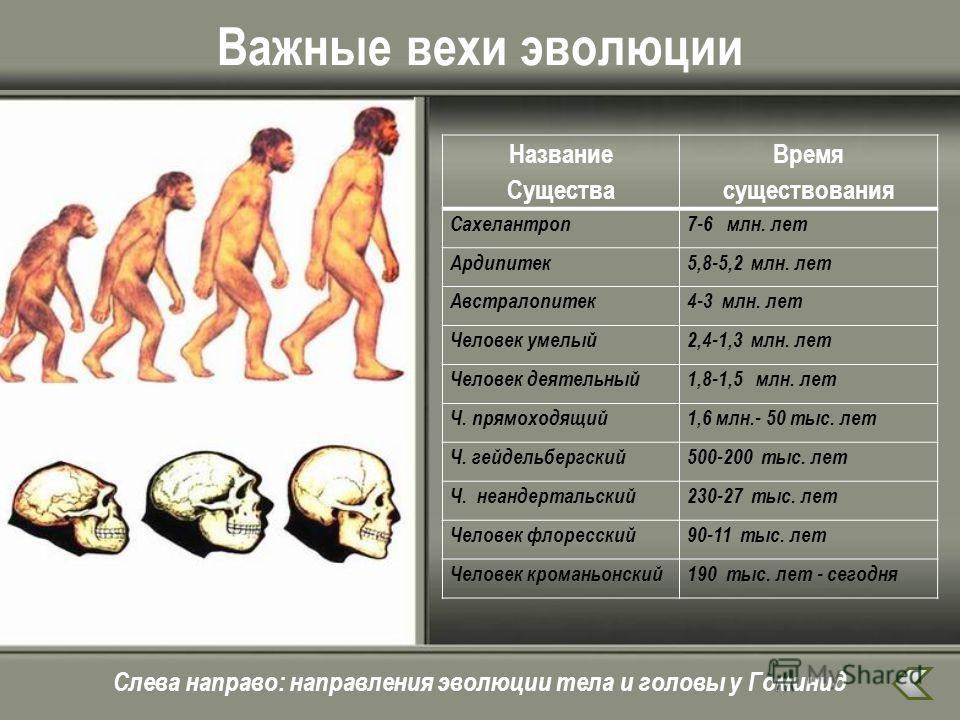 Важные вехи эволюции Название Существа Время существования Сахелантроп 7-6 млн. лет Ардипитек 5,8-5,2 млн. лет Австралопитек 4-3 млн. лет Человек умелый 2,4-1,3 млн. лет Человек деятельный 1,8-1,5 млн. лет Ч. прямоходящий 1,6 млн.- 50 тыс. лет Ч. гей