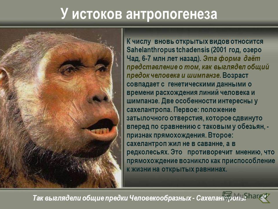 У истоков антропогенеза К числу вновь открытых видов относится Sahelanthropus tchadensis (2001 год, озеро Чад, 6-7 млн лет назад). Эта форма даёт представление о том, как выглядел общий предок человека и шимпанзе. Возраст совпадает с генетическими да