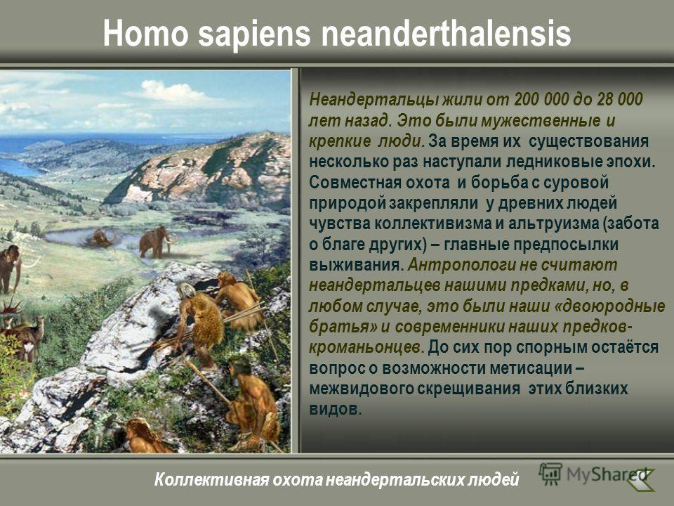 Homo sapiens neanderthalensis Неандертальцы жили от 200 000 до 28 000 лет назад. Это были мужественные и крепкие люди. За время их существования несколько раз наступали ледниковые эпохи. Совместная охота и борьба с суровой природой закрепляли у древн