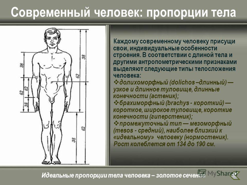 Современный человек: пропорции тела Каждому современному человеку присущи свои, индивидуальные особенности строения. В соответствии с длиной тела и другими антропометрическими признаками выделяют следующие типы телосложения человека: долихоморфный (d