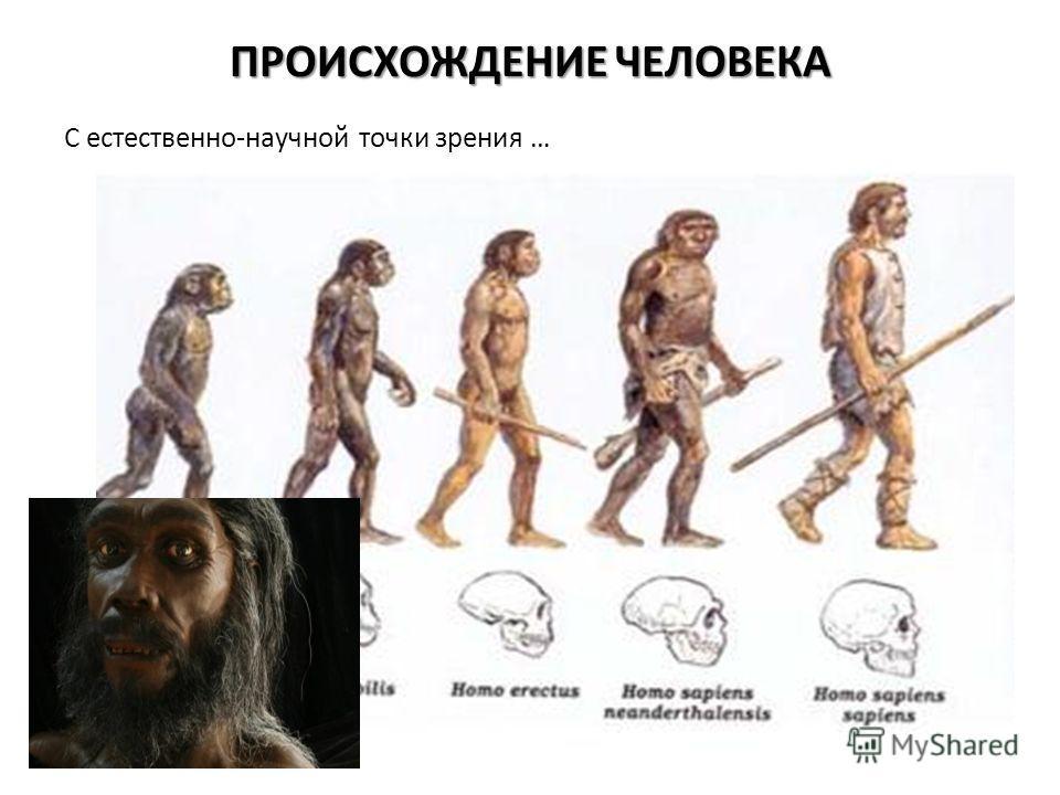 ПРОИСХОЖДЕНИЕ ЧЕЛОВЕКА С естественно-научной точки зрения …