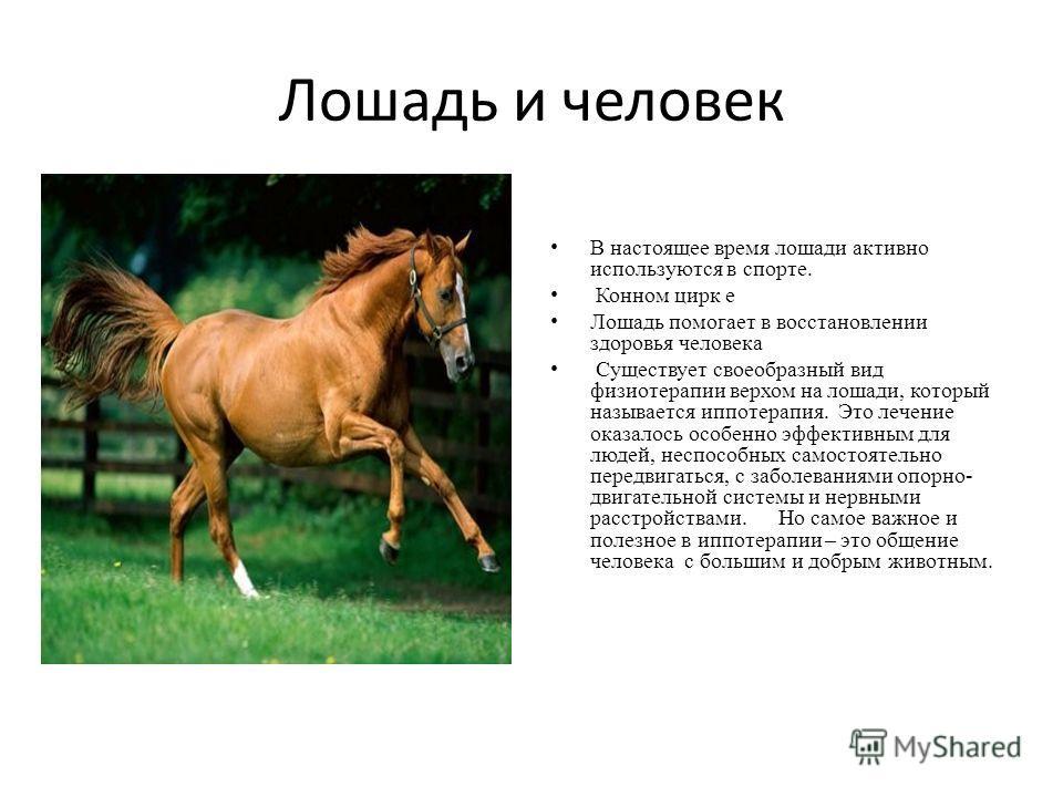 Лошадь и человек В настоящее время лошади активно используются в спорте. Конном цирк е Лошадь помогает в восстановлении здоровья человека Существует своеобразный вид физиотерапии верхом на лошади, который называется иппотерапия. Это лечение оказалось