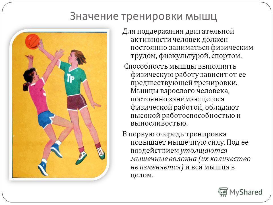 Значение тренировки мышц Для поддержания двигательной активности человек должен постоянно заниматься физическим трудом, физкультурой, спортом. Способность мышцы выполнять физическую работу зависит от ее предшествующей тренировки. Мышцы взрослого чело