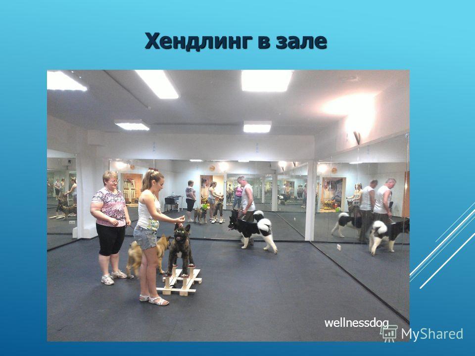 Физиотерапия -лазер; - электрокупунктура; - грязелечение; - светотерапия. Артроз коленного сустава - физиотерапия. wellnessdog