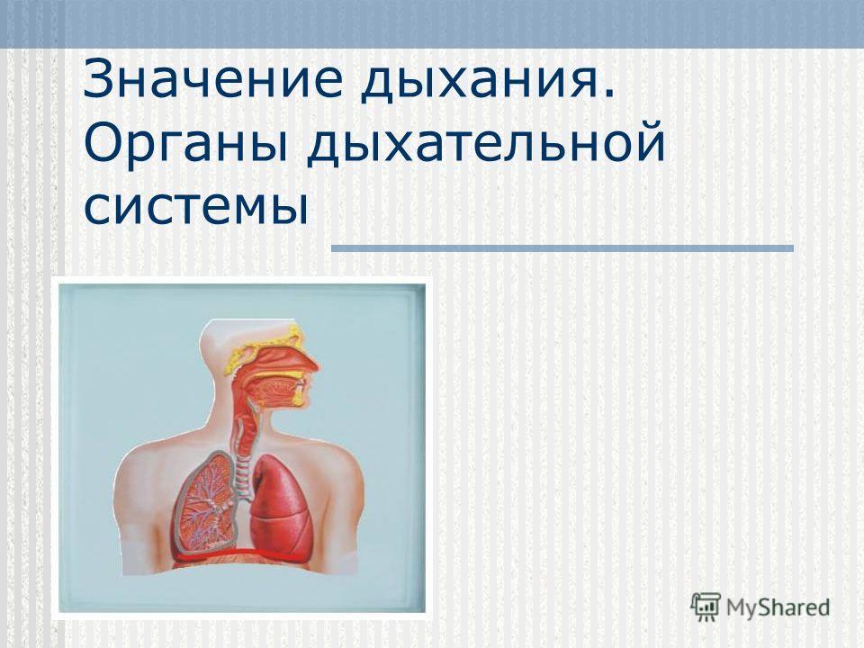 Значение дыхания. Органы дыхательной системы