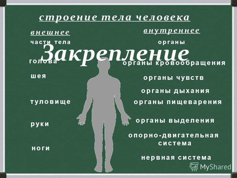 строение тела человека части тела голова шея туловище руки ноги органы органы чувств органы дыхания органы кровообращения органы пищеварения органы выделения опорно-двигательная система нервная система внешнее внутреннее Закрепление
