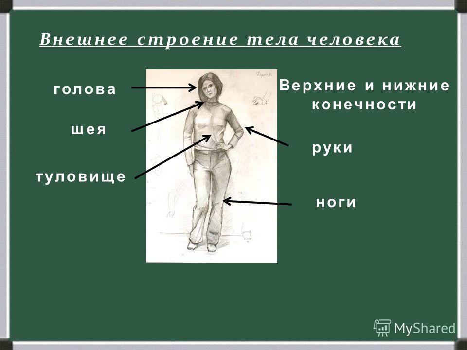 Человек. Строение тела человека. внешнее внутреннее Внешнее строение тела человека голова шея туловище Верхние и нижние конечности руки ноги
