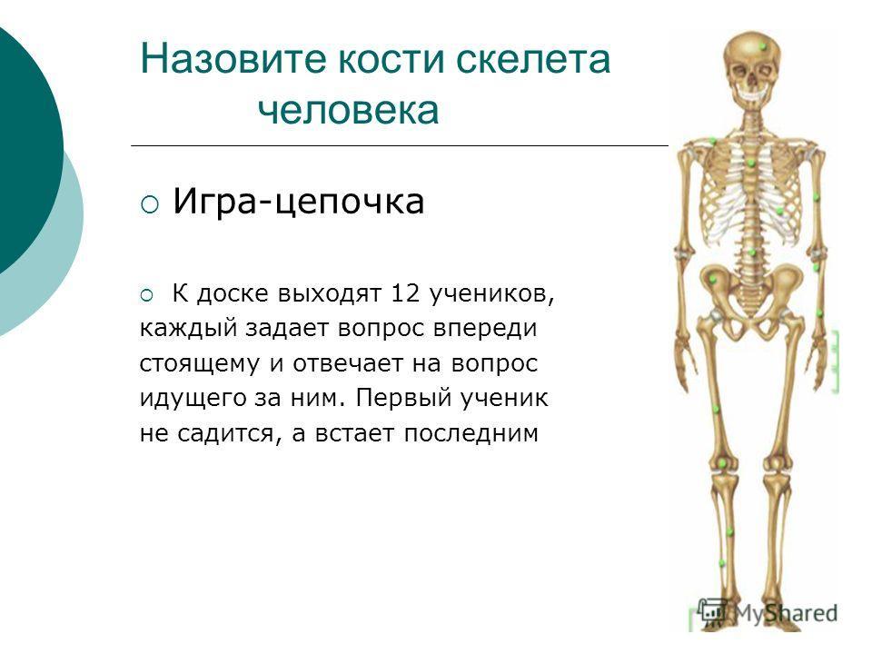 Назовите кости скелета человека Игра-цепочка К доске выходят 12 учеников, каждый задает вопрос впереди стоящему и отвечает на вопрос идущего за ним. Первый ученик не садится, а встает последним