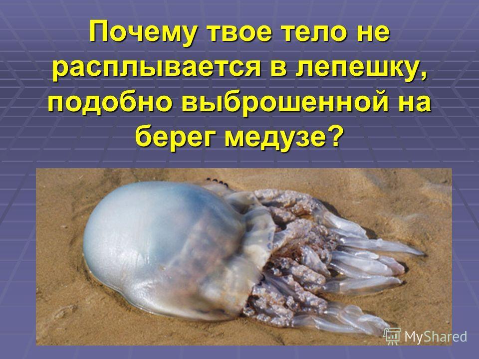Почему твое тело не расплывается в лепешку, подобно выброшенной на берег медузе?