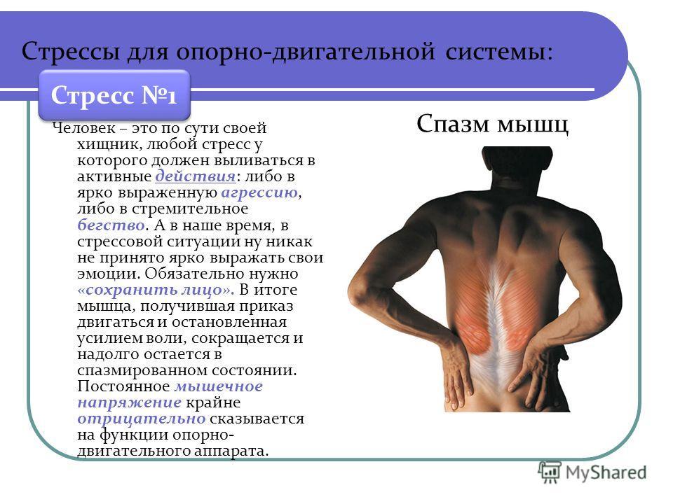 Стрессы для опорно-двигательной системы: Человек – это по сути своей хищник, любой стресс у которого должен выливаться в активные действия: либо в ярко выраженную агрессию, либо в стремительное бегство. А в наше время, в стрессовой ситуации ну никак