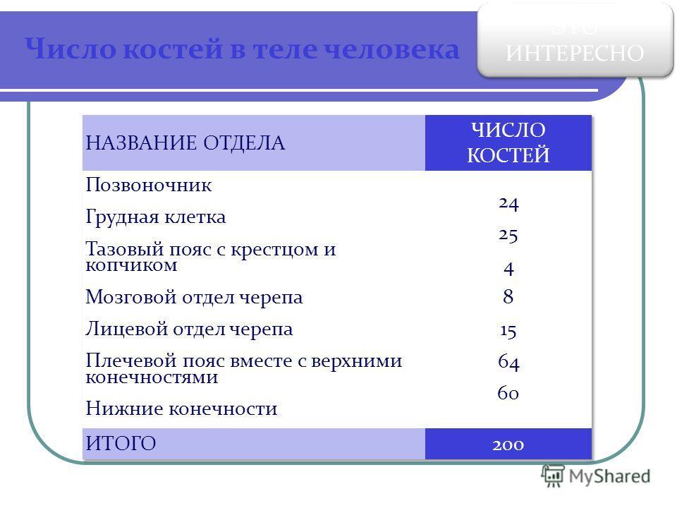 Число костей в теле человека ЭТО ИНТЕРЕСНО