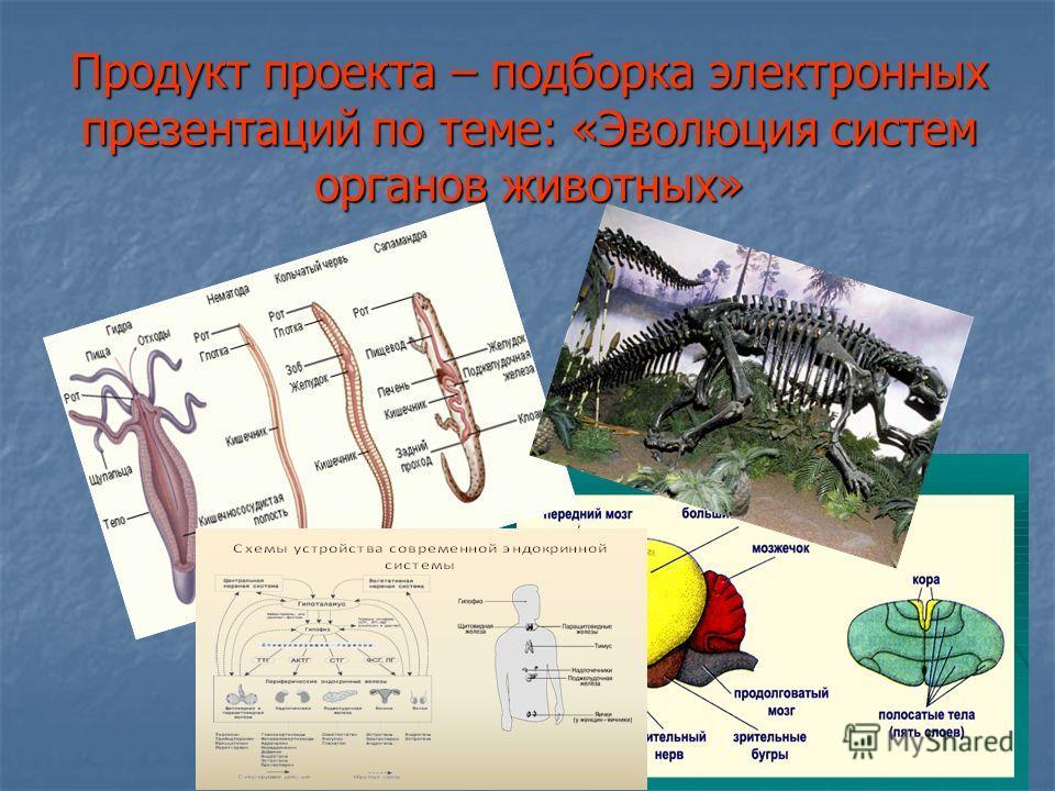 Продукт проекта – подборка электронных презентаций по теме: «Эволюция систем органов животных»