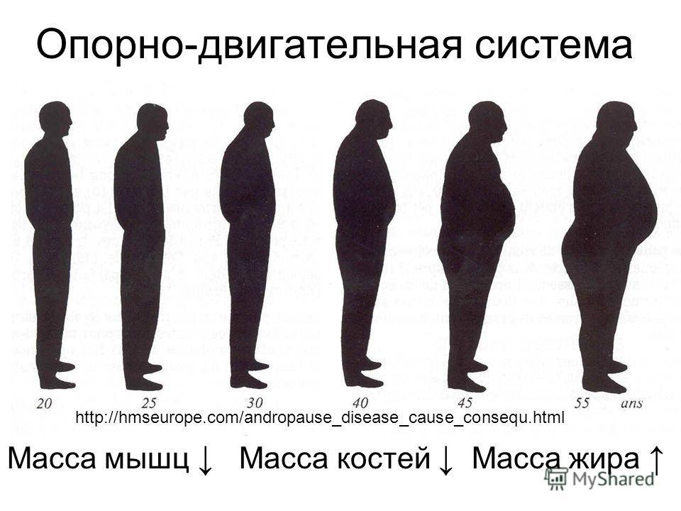 Опорно-двигательная система Масса мышц Масса костей Масса жира http://hmseurope.com/andropause_disease_cause_consequ.html